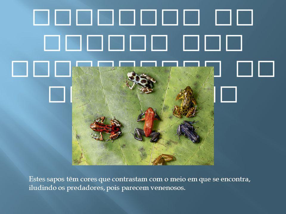 Exemplos de presas com capacidade de mimetismo