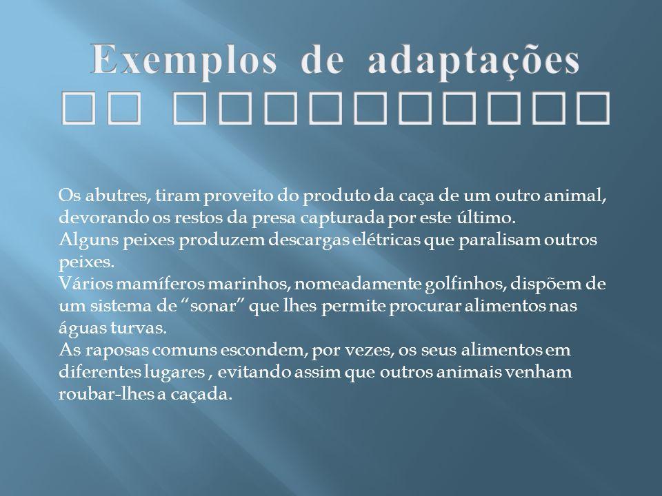 Exemplos de adaptações