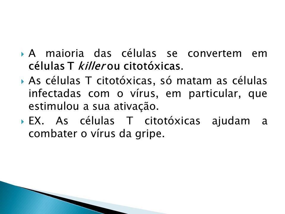 A maioria das células se convertem em células T killer ou citotóxicas.