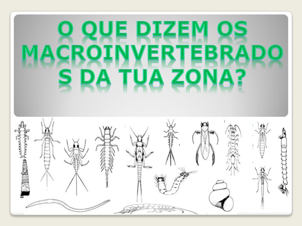 O que dizem os macroinvertebrados da tua zona