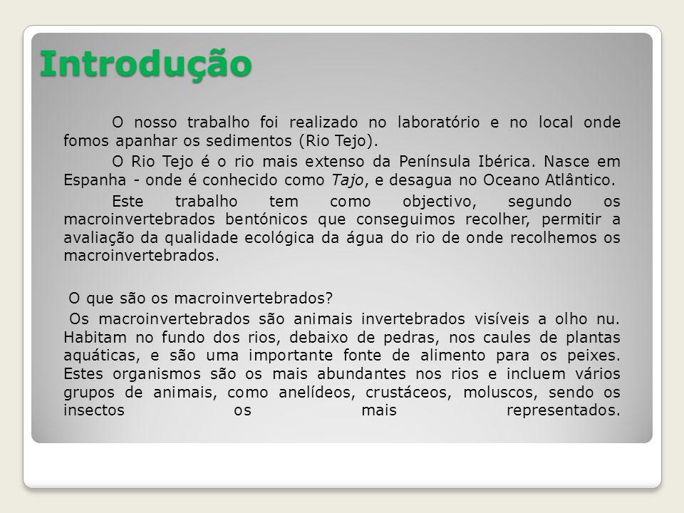 Introdução O nosso trabalho foi realizado no laboratório e no local onde fomos apanhar os sedimentos (Rio Tejo).