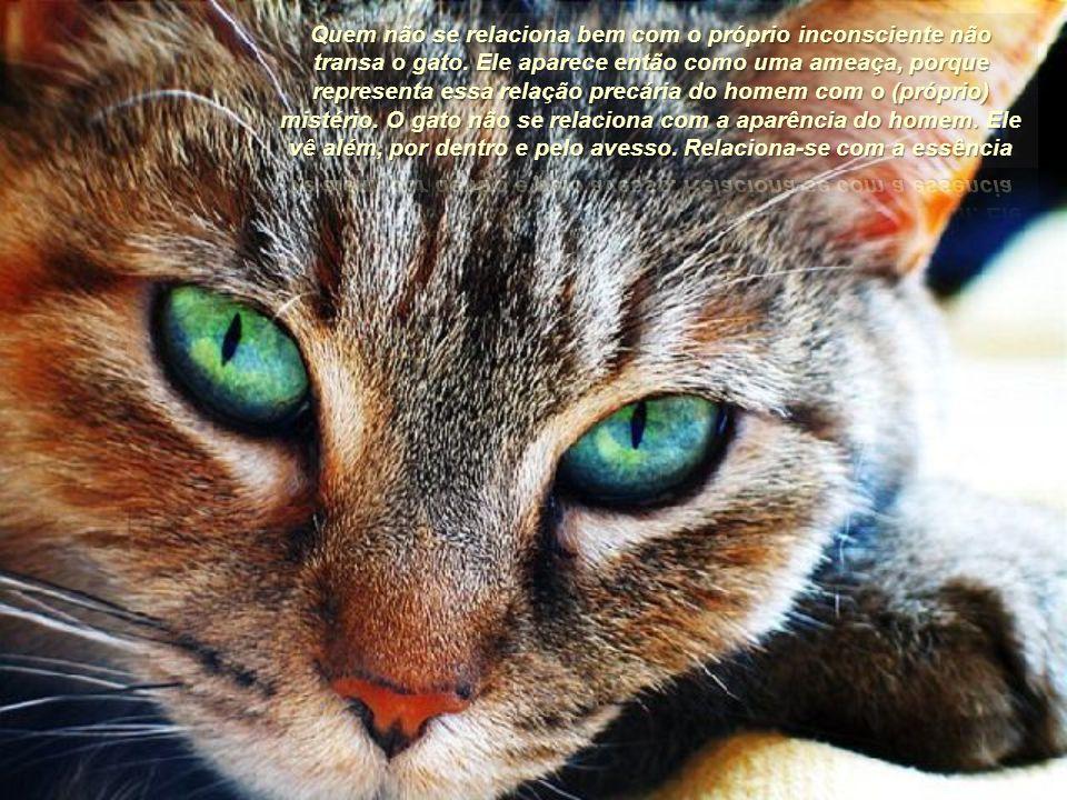 Quem não se relaciona bem com o próprio inconsciente não transa o gato