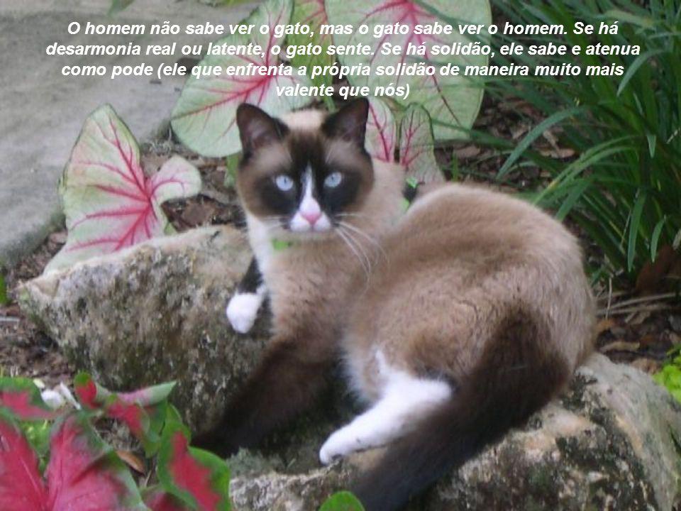 O homem não sabe ver o gato, mas o gato sabe ver o homem