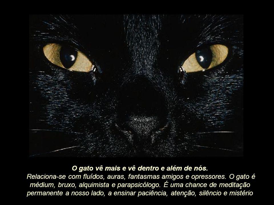 O gato vê mais e vê dentro e além de nós.