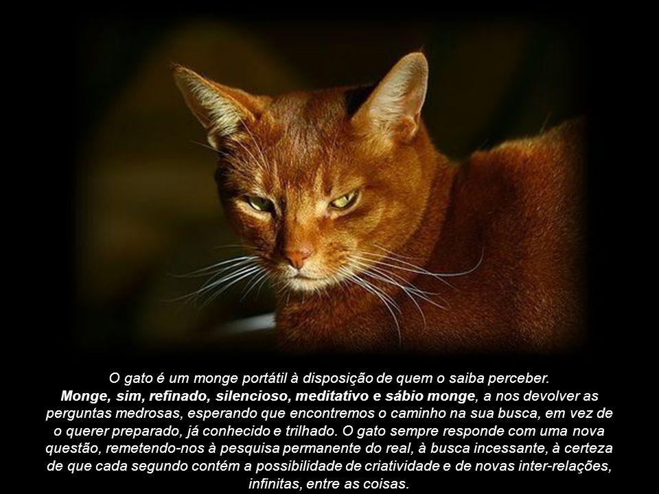 O gato é um monge portátil à disposição de quem o saiba perceber