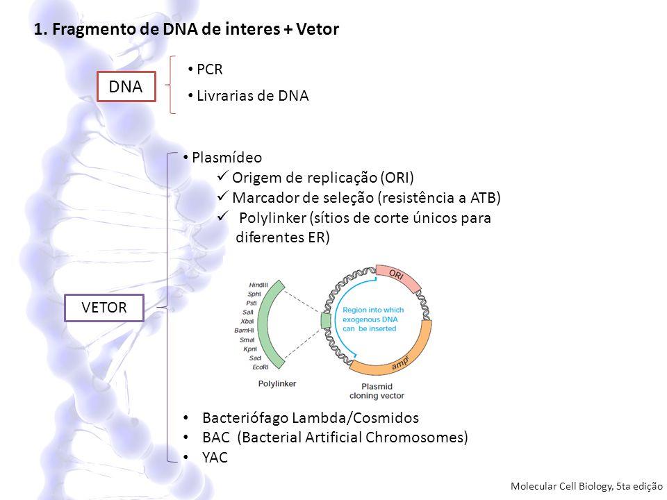 1. Fragmento de DNA de interes + Vetor