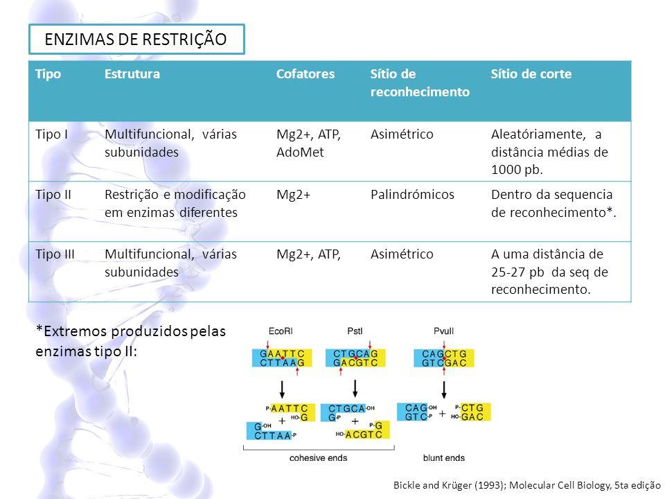 ENZIMAS DE RESTRIÇÃO *Extremos produzidos pelas enzimas tipo II: Tipo