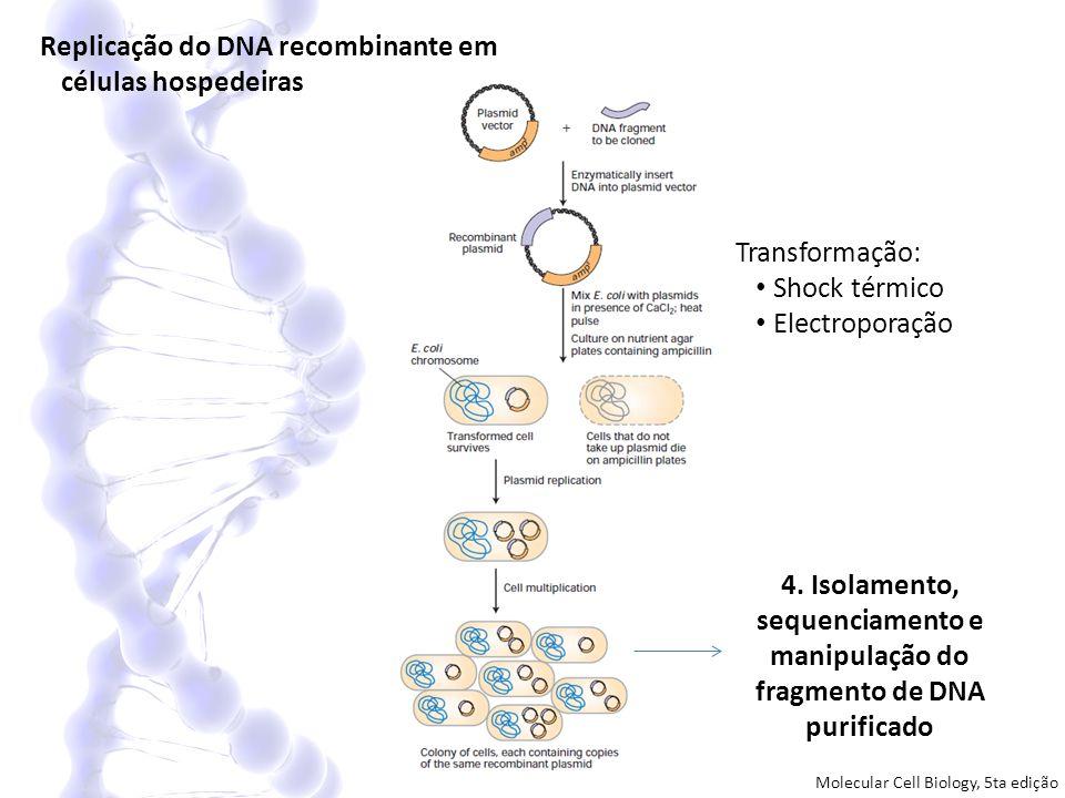 Replicação do DNA recombinante em células hospedeiras