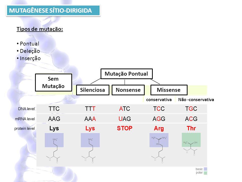 MUTAGÊNESE SÍTIO-DIRIGIDA