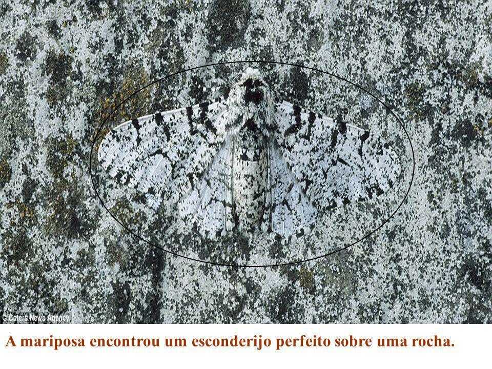 A mariposa encontrou um esconderijo perfeito sobre uma rocha.
