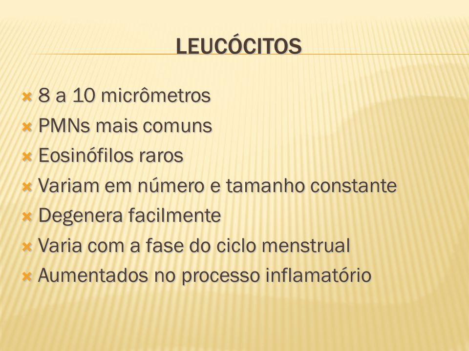 Leucócitos 8 a 10 micrômetros PMNs mais comuns Eosinófilos raros