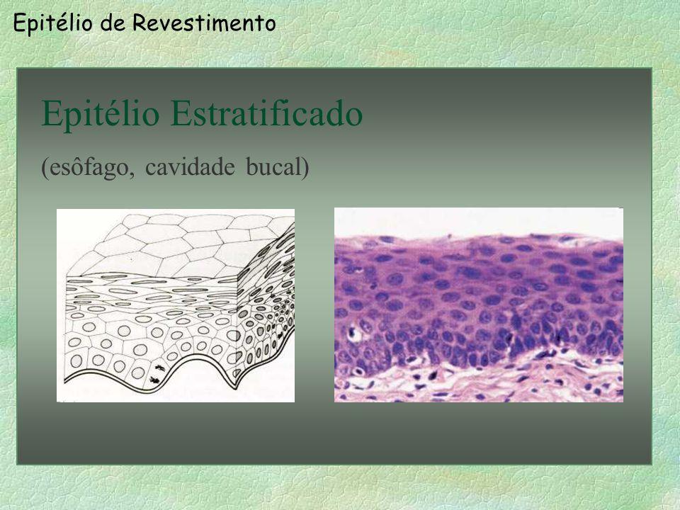 Epitélio Estratificado