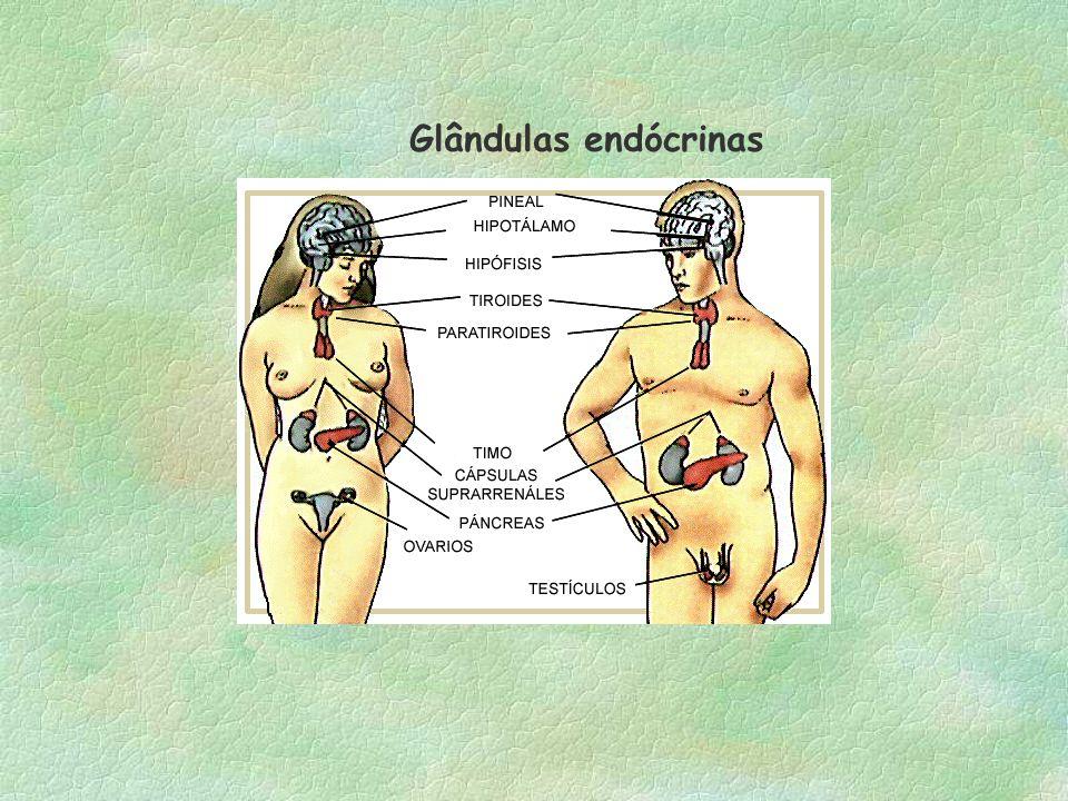 Glândulas endócrinas