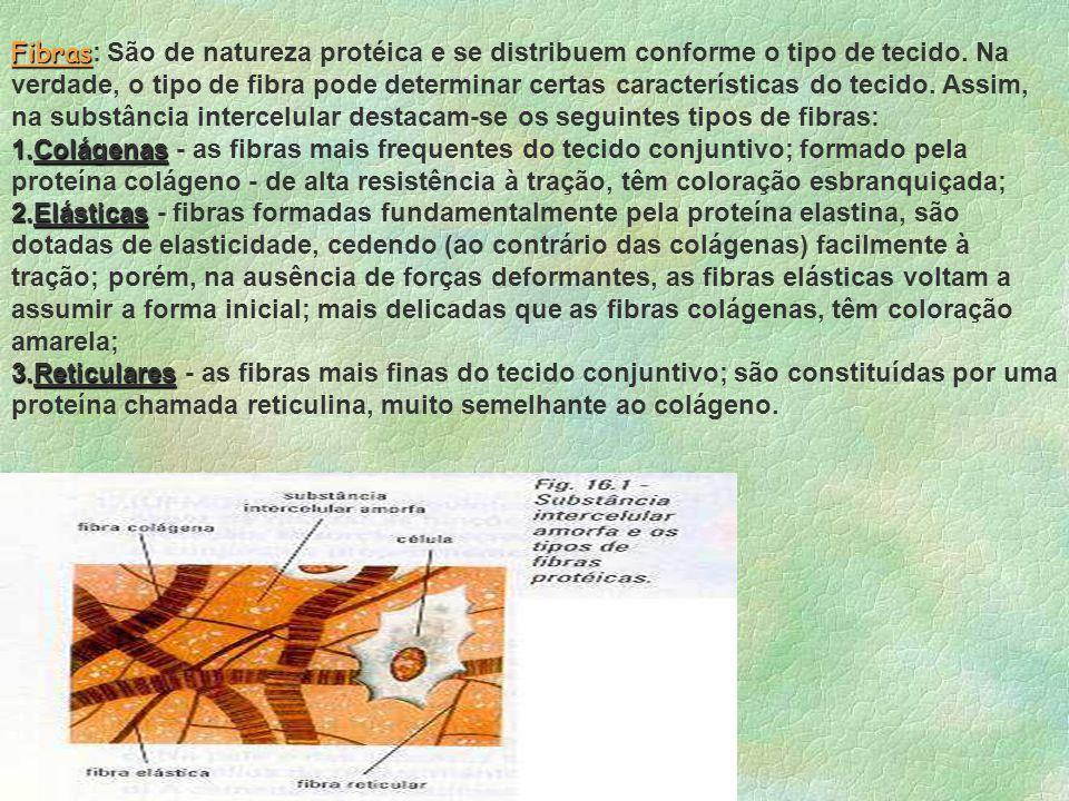 Fibras: São de natureza protéica e se distribuem conforme o tipo de tecido. Na verdade, o tipo de fibra pode determinar certas características do tecido. Assim, na substância intercelular destacam-se os seguintes tipos de fibras: