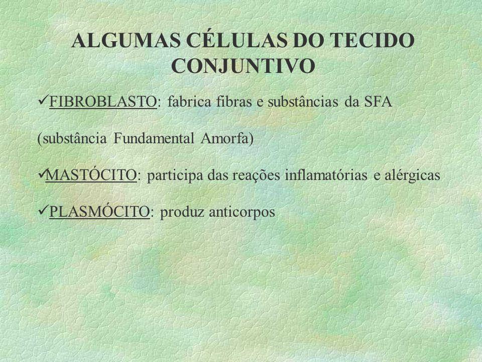 ALGUMAS CÉLULAS DO TECIDO CONJUNTIVO