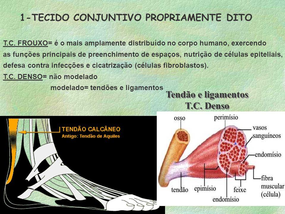 Tendão e ligamentos T.C. Denso