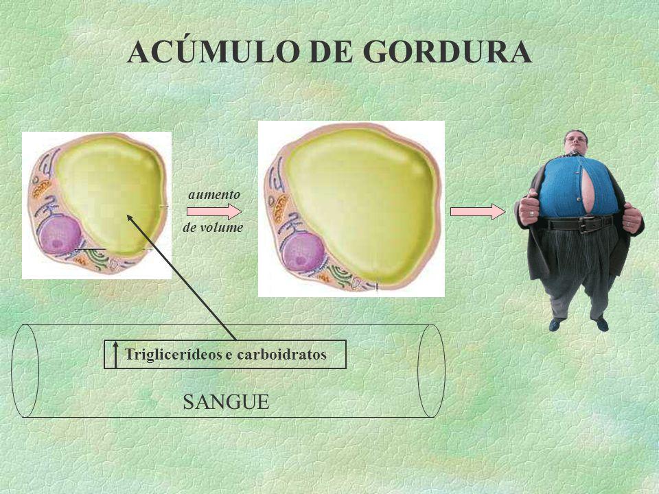 Triglicerídeos e carboidratos