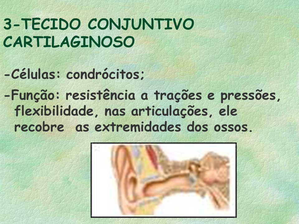 3-TECIDO CONJUNTIVO CARTILAGINOSO