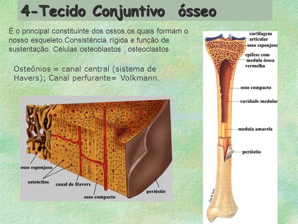 4-Tecido Conjuntivo ósseo