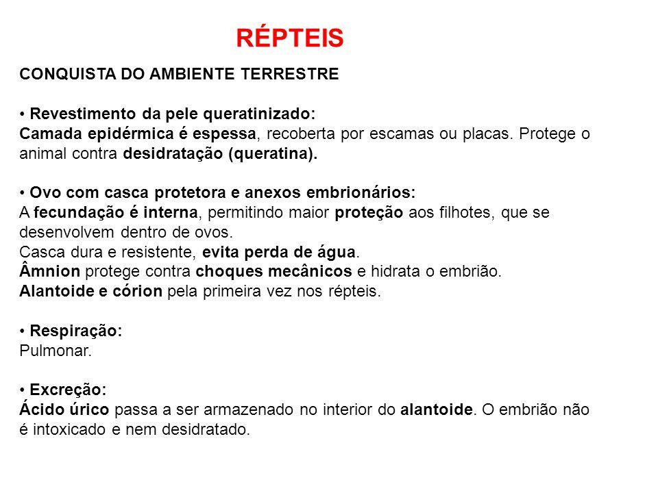 RÉPTEIS CONQUISTA DO AMBIENTE TERRESTRE