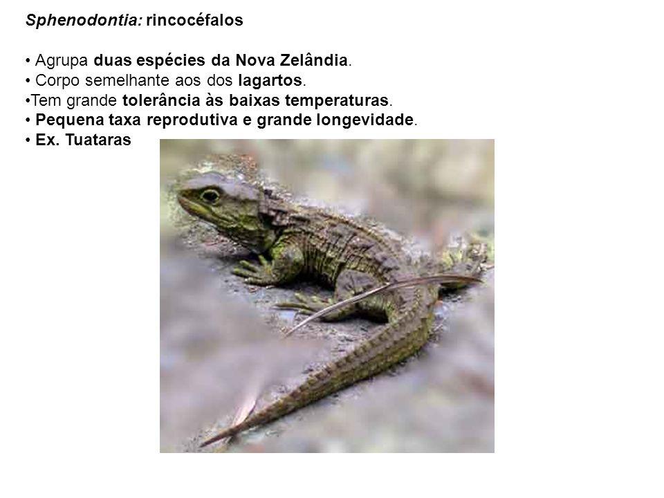 Sphenodontia: rincocéfalos