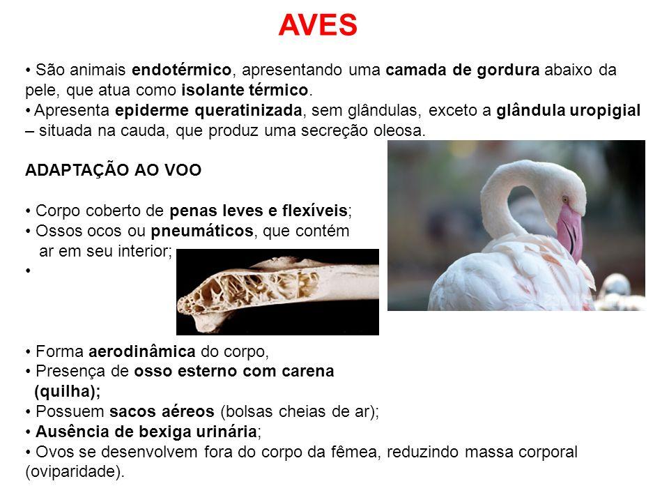 AVES São animais endotérmico, apresentando uma camada de gordura abaixo da pele, que atua como isolante térmico.