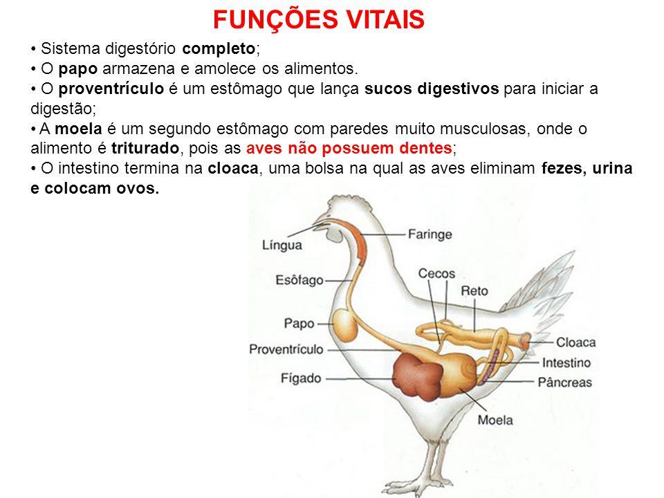 FUNÇÕES VITAIS Sistema digestório completo;