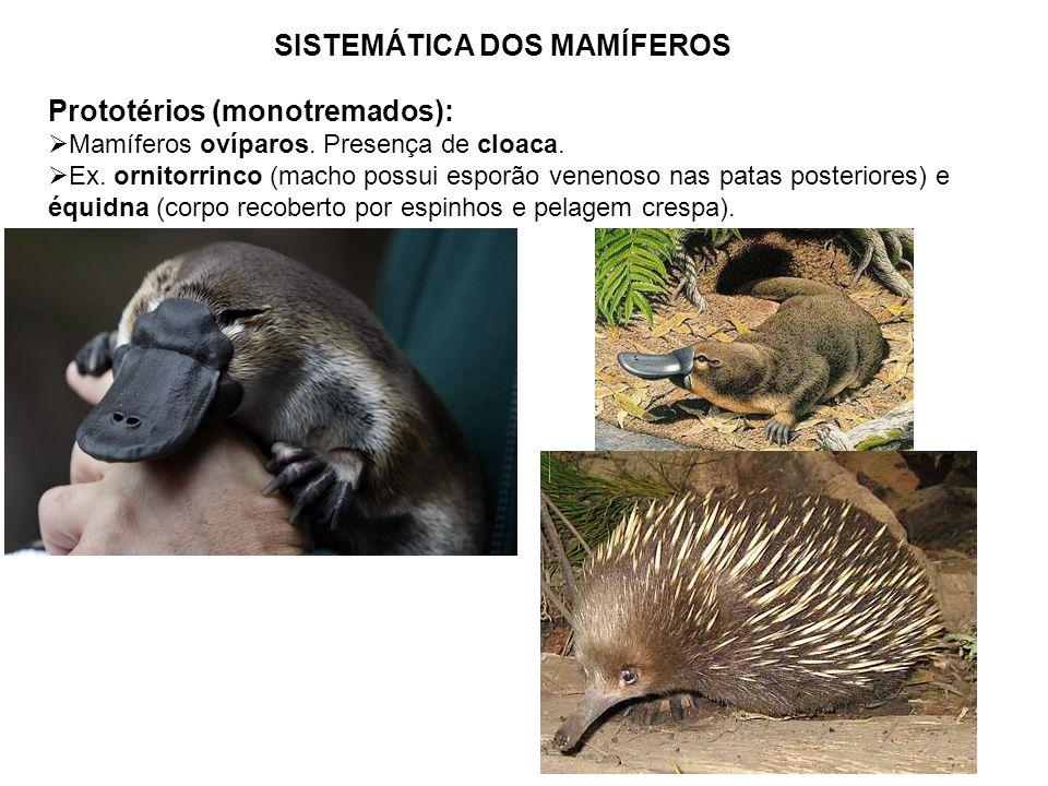 SISTEMÁTICA DOS MAMÍFEROS