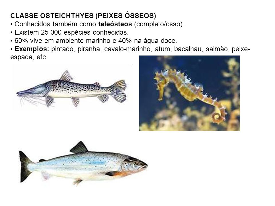 CLASSE OSTEICHTHYES (PEIXES ÓSSEOS)