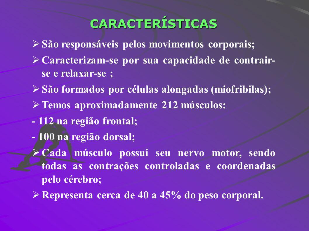 CARACTERÍSTICAS São responsáveis pelos movimentos corporais;