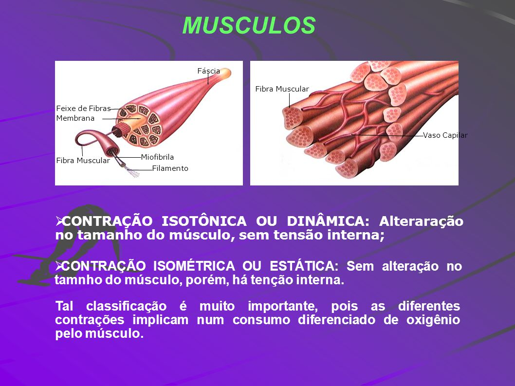 MUSCULOS Feixe de Fibras. Membrana. Fibra Muscular. Miofibrila. Filamento. Fáscia. Fibra Muscular.