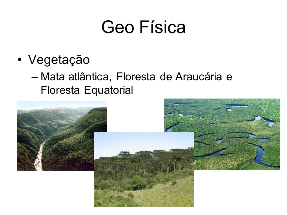 Geo Física Vegetação Mata atlântica, Floresta de Araucária e Floresta Equatorial