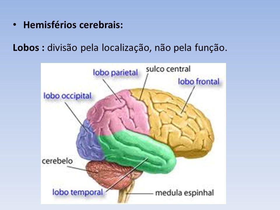 Hemisférios cerebrais: