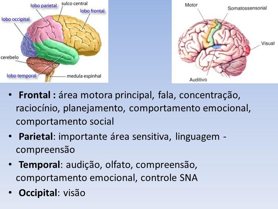 Frontal : área motora principal, fala, concentração, raciocínio, planejamento, comportamento emocional, comportamento social