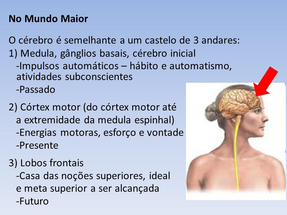 No Mundo Maior O cérebro é semelhante a um castelo de 3 andares: 1) Medula, gânglios basais, cérebro inicial.