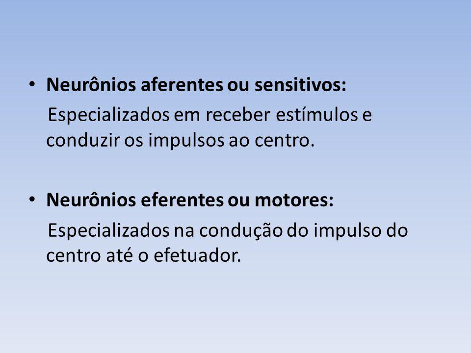 Neurônios aferentes ou sensitivos: