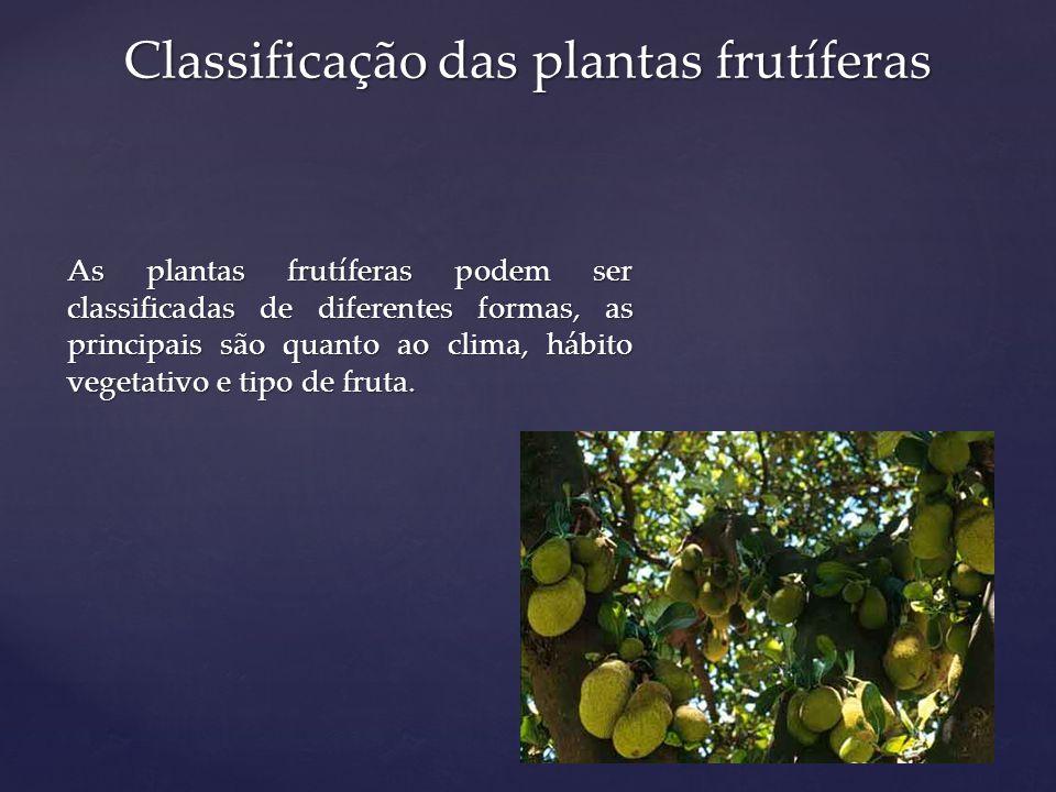 Classificação das plantas frutíferas