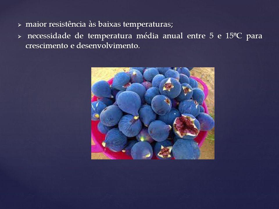 maior resistência às baixas temperaturas;