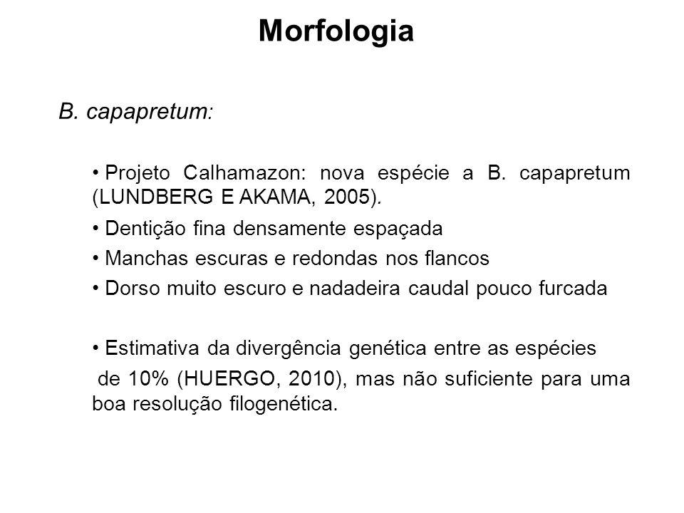 Morfologia B. capapretum: