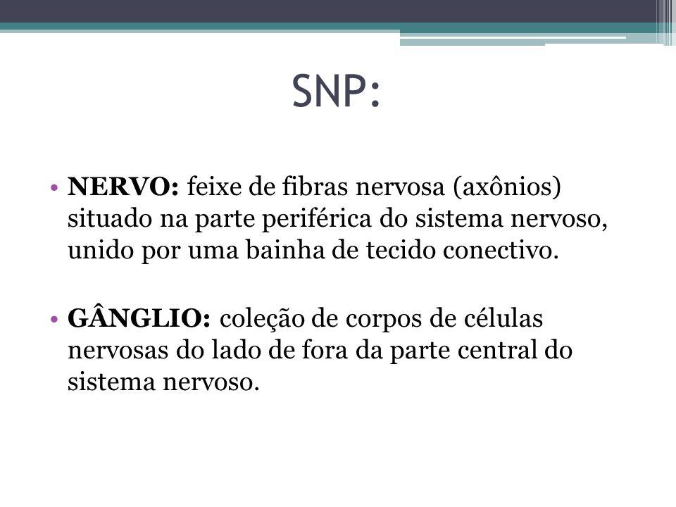 SNP: NERVO: feixe de fibras nervosa (axônios) situado na parte periférica do sistema nervoso, unido por uma bainha de tecido conectivo.