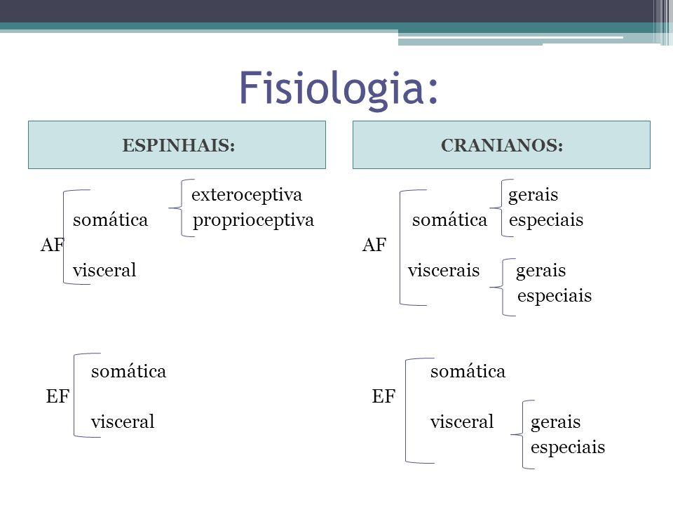 Fisiologia: ESPINHAIS: CRANIANOS: exteroceptiva somática proprioceptiva AF visceral somática EF