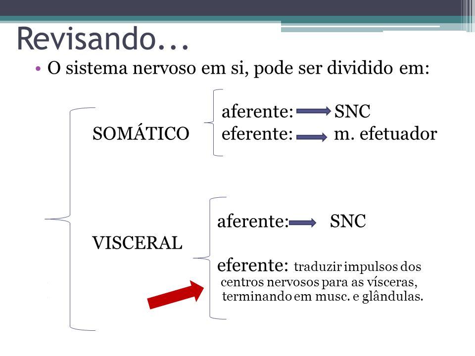 Revisando... O sistema nervoso em si, pode ser dividido em: