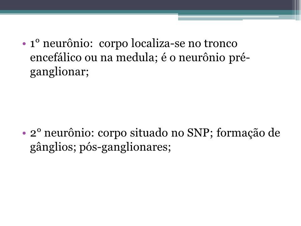 1° neurônio: corpo localiza-se no tronco encefálico ou na medula; é o neurônio pré- ganglionar;