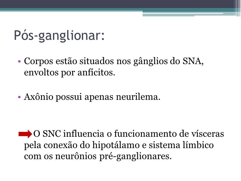 Pós-ganglionar: Corpos estão situados nos gânglios do SNA, envoltos por anfícitos. Axônio possui apenas neurilema.