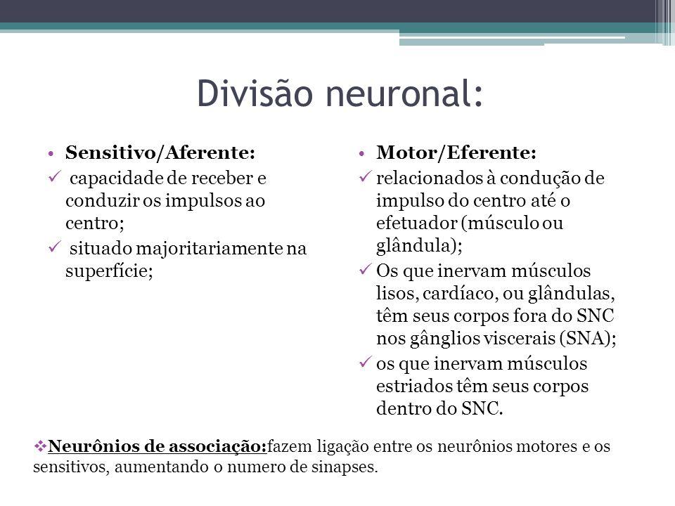 Divisão neuronal: Sensitivo/Aferente: