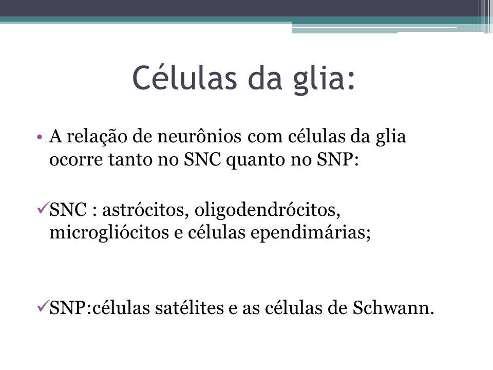 Células da glia: A relação de neurônios com células da glia ocorre tanto no SNC quanto no SNP: