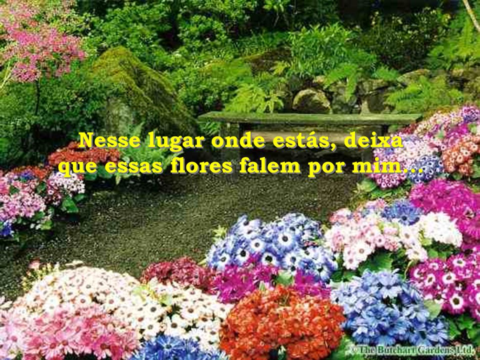 Nesse lugar onde estás, deixa que essas flores falem por mim...
