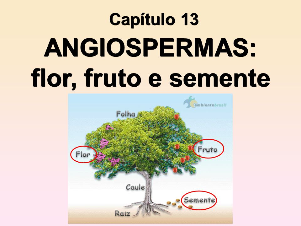 ANGIOSPERMAS: flor, fruto e semente