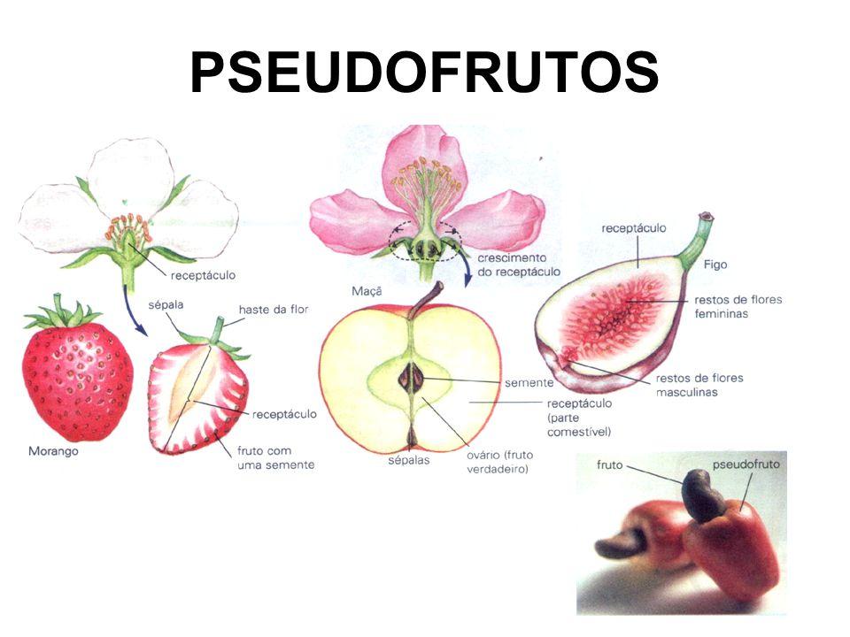 PSEUDOFRUTOS falsos frutos: cajú: pedúnculo da flor