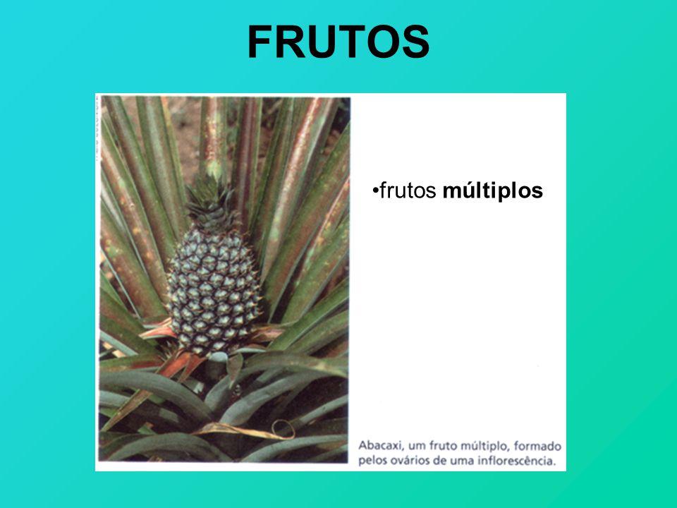 FRUTOS frutos múltiplos